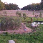 biologiskt,naturligt,hållbart,Växtreningsverk,små avlopp